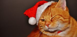 cat-and christmas hat